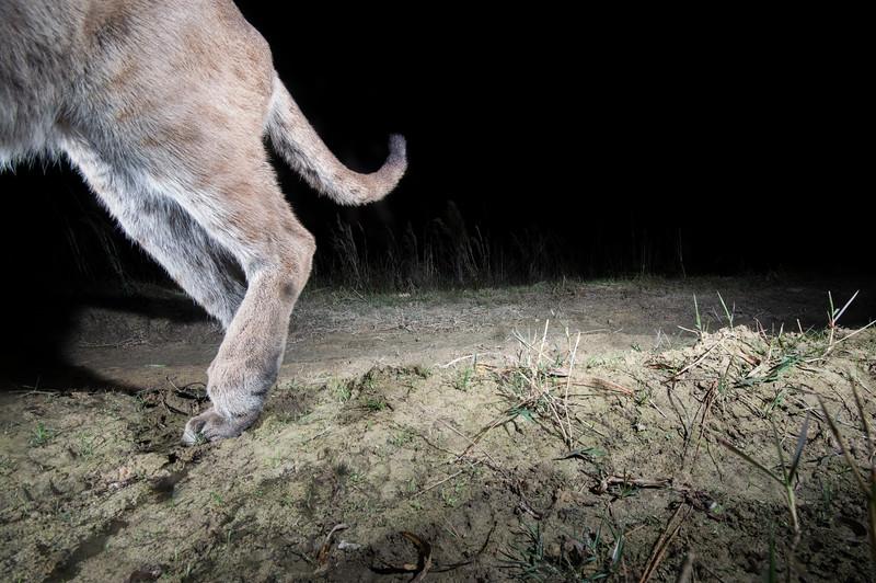 panther 13.jpg