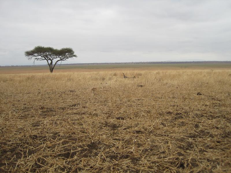 Tanzania14-3213.jpg