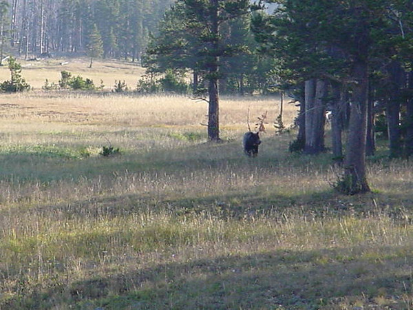 Yes, as a matter of fact, that is a Grizzly Bear walking into our camp...