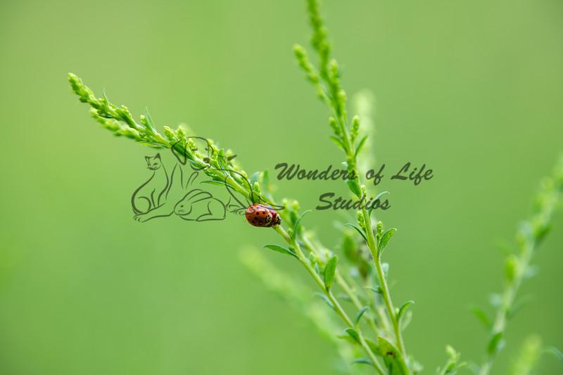 Tiny Wonders
