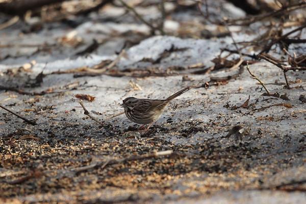 22 Mar 2021 Falaise Roger & Birds