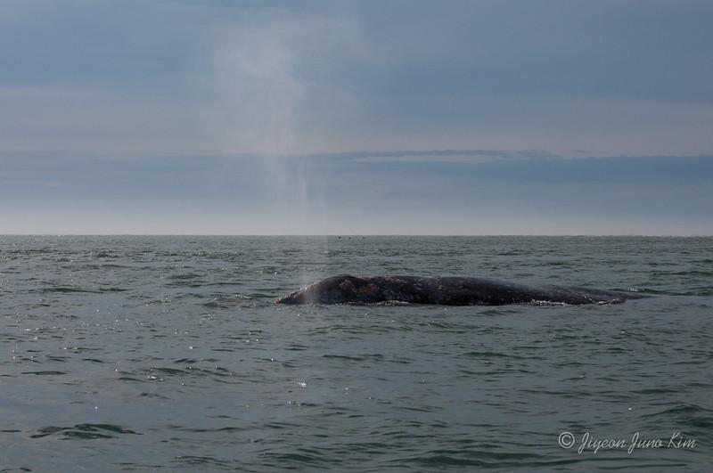 Mexico-Loreto-Whale-2471.jpg