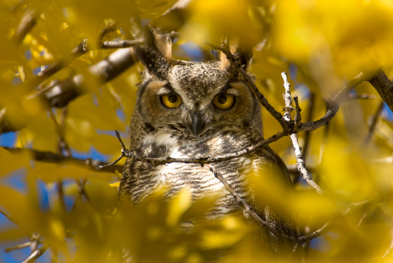 Owl Final_Edit.jpg