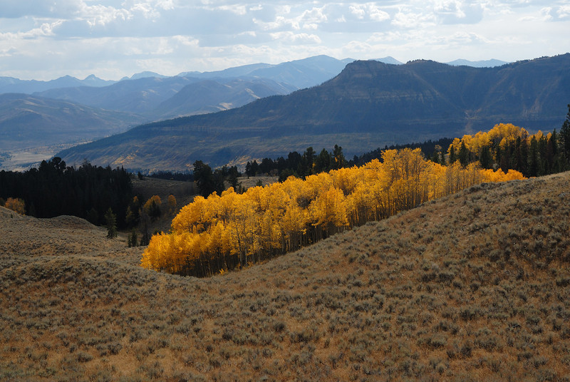 Heading down from 11,000 feet the sun broke and the aspens are attired in all of their splendor.