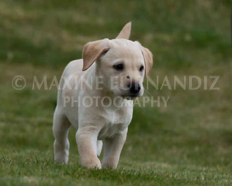 Weika Puppies 24 March 2019-6690.jpg