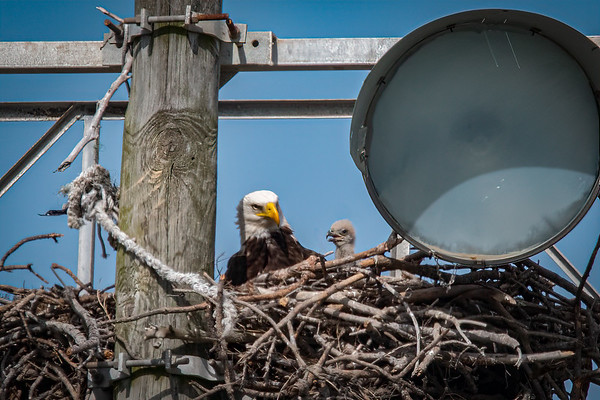 Bald Eagle Nest BE994 - February 21.23,25, & 26