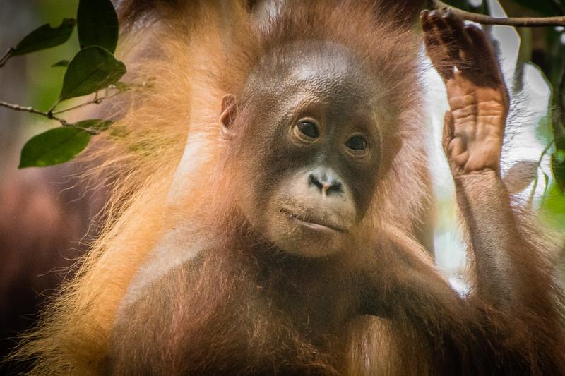 Borneo-2277.jpg