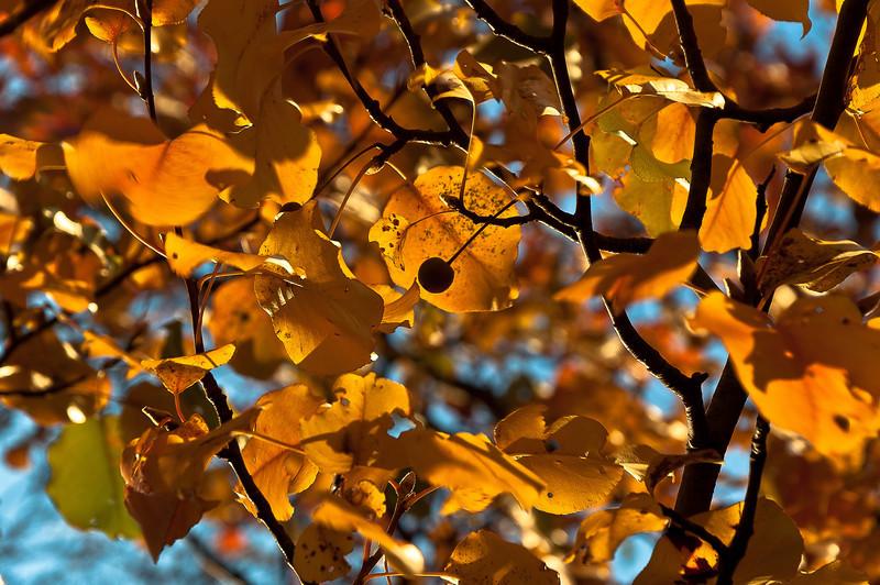 fall02.jpg