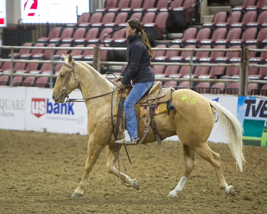 2017 NILE Gold Buckle Select Performance Horse Sale Rreview