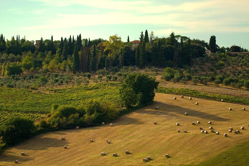 """""""Harvest Season"""", Volterra, Tuscany"""