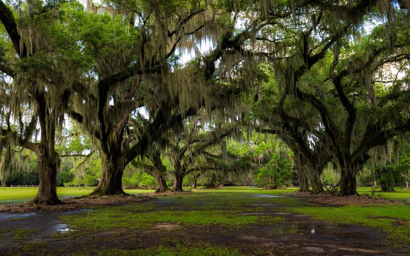 Under the Oaks.jpg