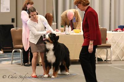 Veteran Dog 9-11yrs 2015 BMDCA Natl. Specialty