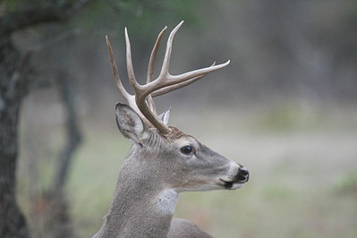 Whitetail Season 2006 - Stonewall, Texas