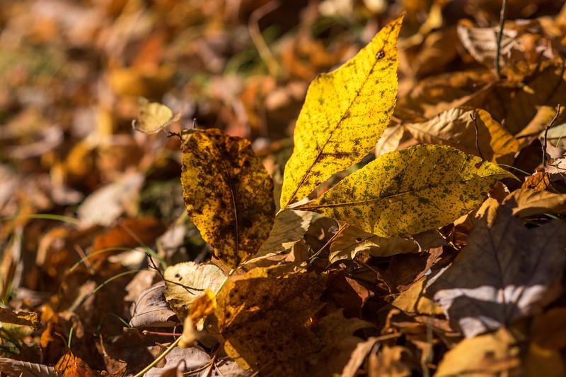 foliage-2014-96.jpg