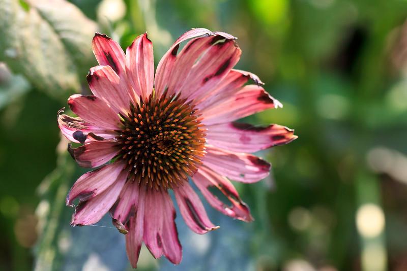 meadowlark-42_September 04, 2011.jpg