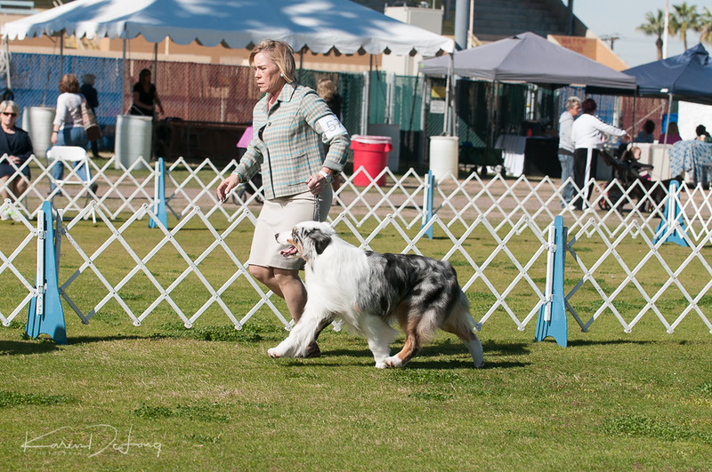 20170205_Australian Shepherds_Lost Dutchman Kennel Club-84.jpg