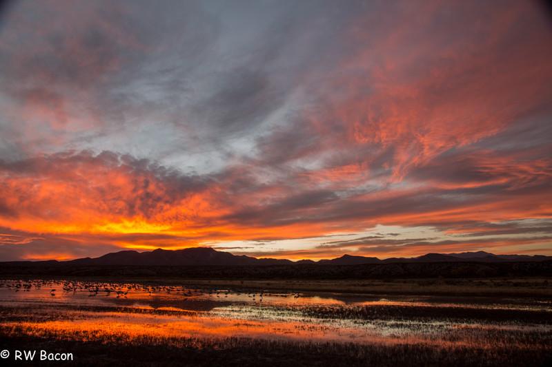 Bosque Sunset.jpg