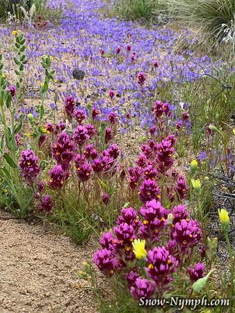 2020-04-16 Finally got my wildflower fix! Solo distancing