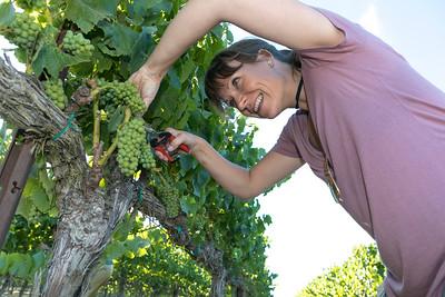 SLH Wine Tour Morgan, Talbott, McIntyre, Garys' , Soberanes  &  Pessagno 7-17-18