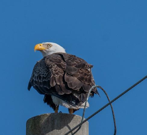 Bald Eagle Nest BE27 - February 24, 2020