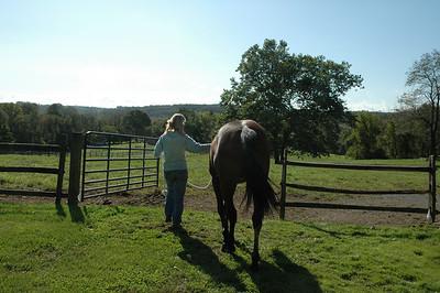 horse - 10 8 09 cajun