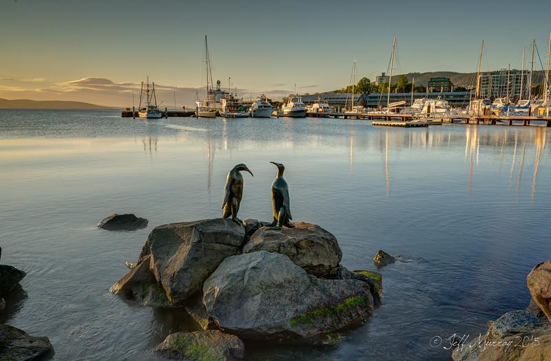 The Bernarcchi Penguins