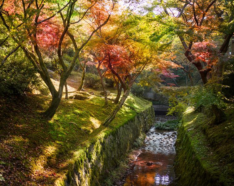 An Autumn Walk in Kyoto