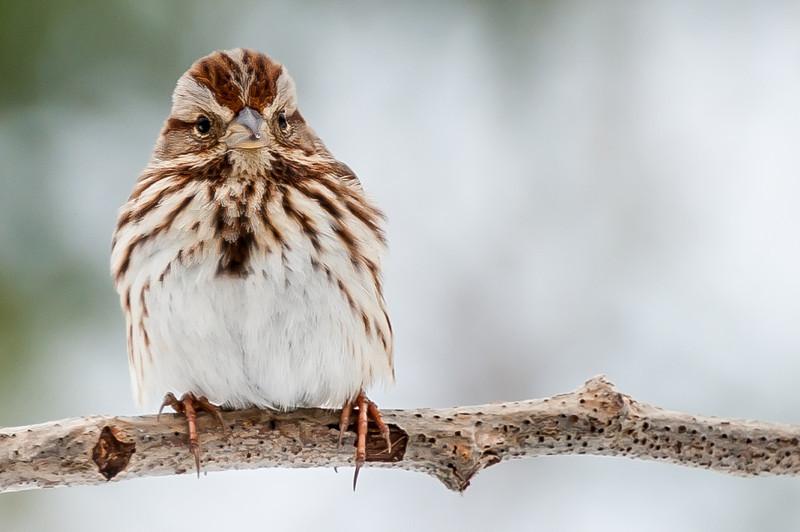 wolverine bird 4x6.jpg