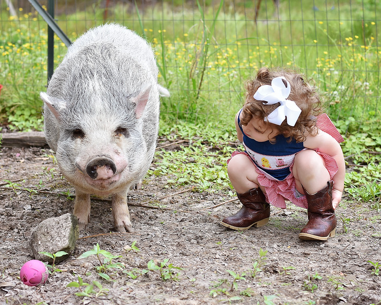 My friend brought her little girl Livvy over yesterday to see all my animals..it was too cute when she was telling my pig Bernie hi..he even looked like he was smiling!!