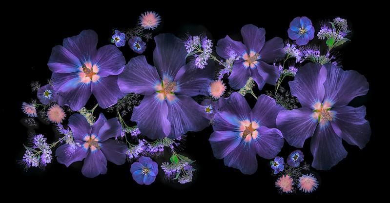 0916_Illum_Flowers_-50-Edit_copy_3.jpg