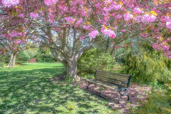 Spring & Summer Landscape