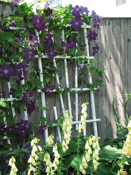 garden-2007-06-0600_std.jpg