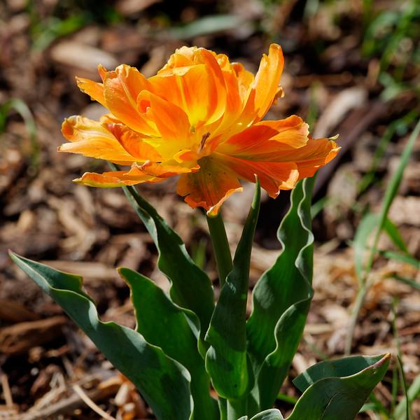 Springtime flowers 2021