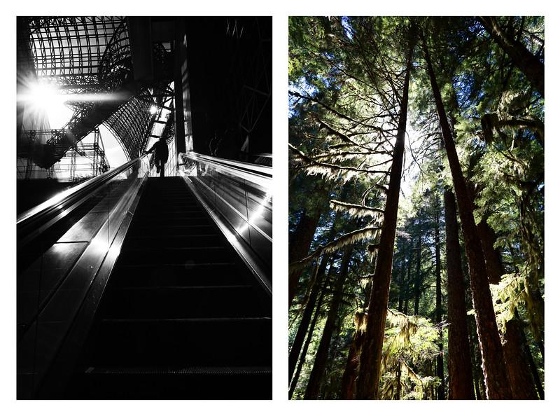 Tree Escalator copy.jpg