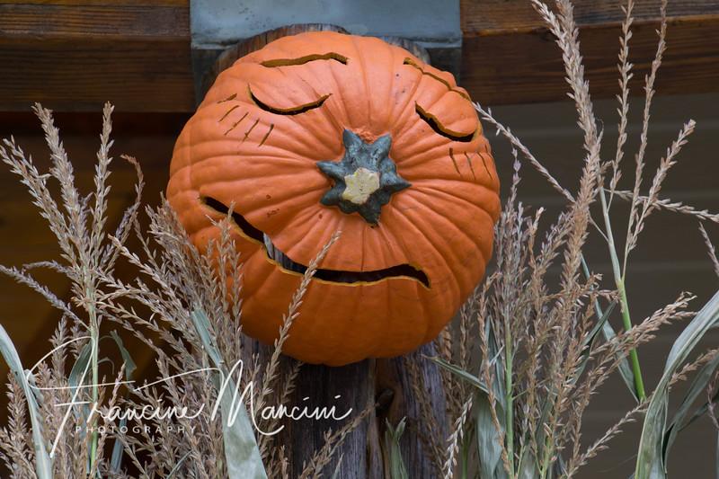 Halloween (1 of 1) copy.jpg