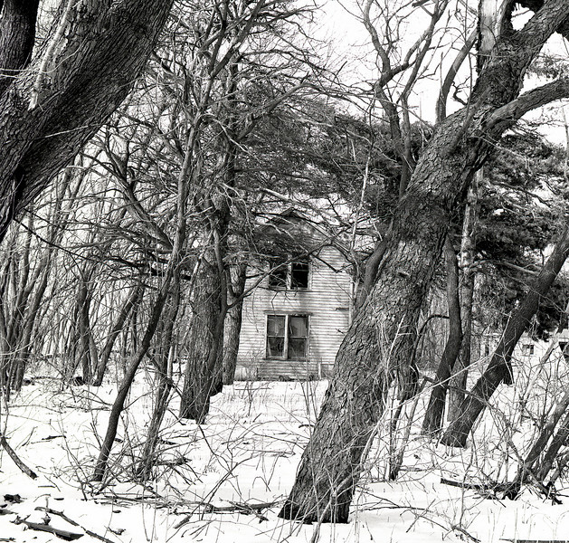 47581144_House in the woods