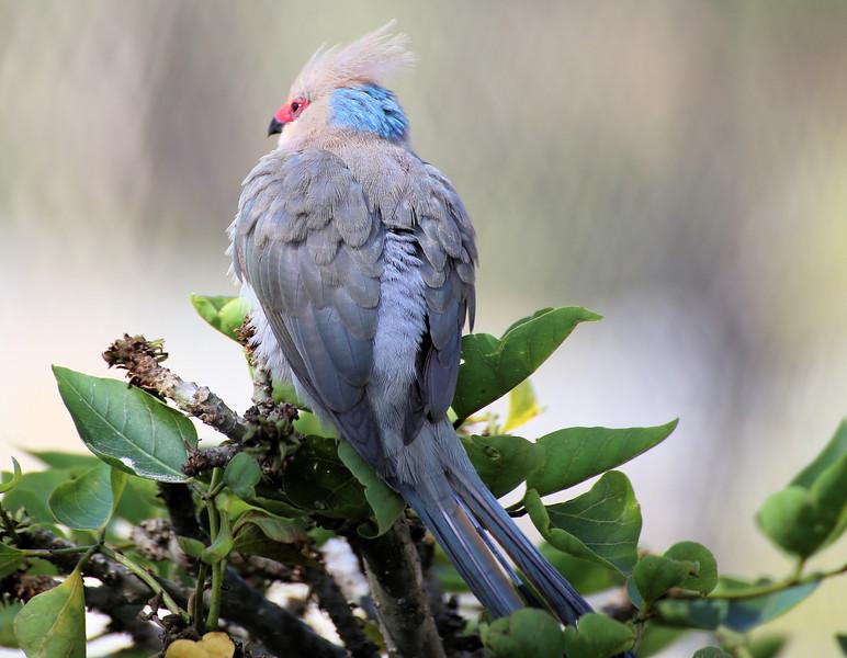 IMG_8816 San Diego Zoo Bird 5.6.2018.jpg