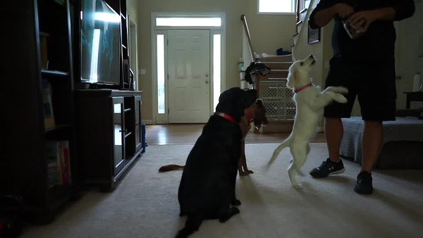 Winnie Training Video
