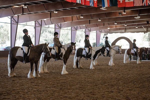 Individual Gypsy Horses