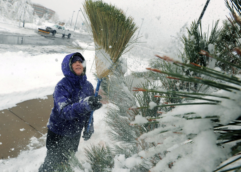 . Kelly Scholl, a horticulturist at the Gardens at Spring Creek in Fort Collins, Colo., uses a broom to knock heavy snow from a tree at the gardens Wednesday May 1, 2013.  (AP Photo/The Coloradoan, Rich Abrahamson)