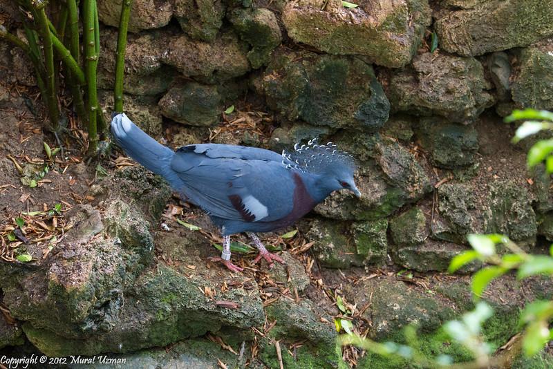 20120219-Aviary-7D-IMG_5903.jpg