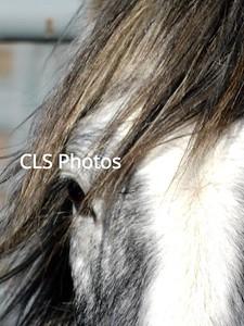 Mustang Mania 2017