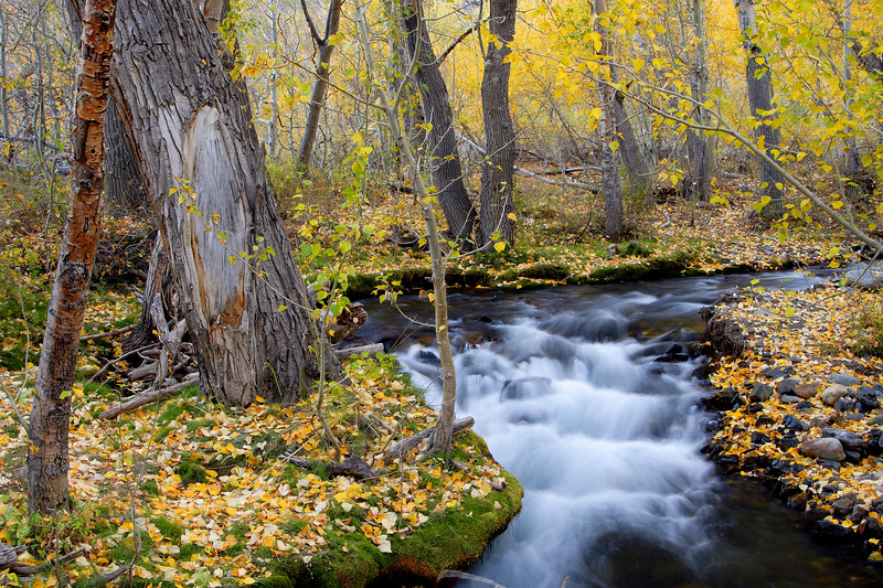McGee Creek, Fall Colors