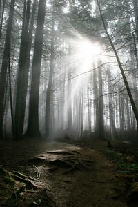 Sunbeams through fog and forest canopy