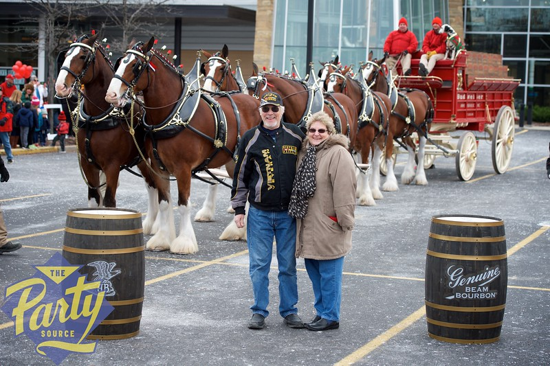 Clydesdale Portraits 51.jpg