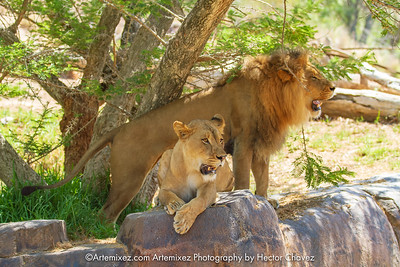 8-04-18 San Diego Safari Park