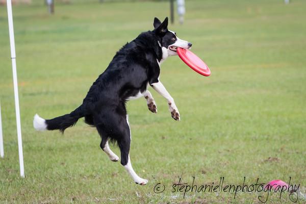 _MG_2475Up_dog_International_2016_StephaniellenPhotography.jpg