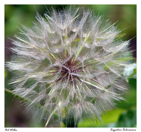 Wonderful Weeds