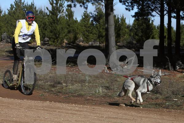 Kowen 2010- Sunday 1 dog