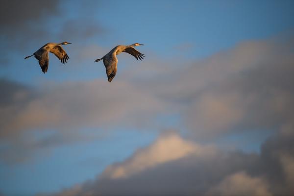 New Mexico Birds